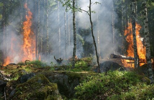 forest fires need replanting